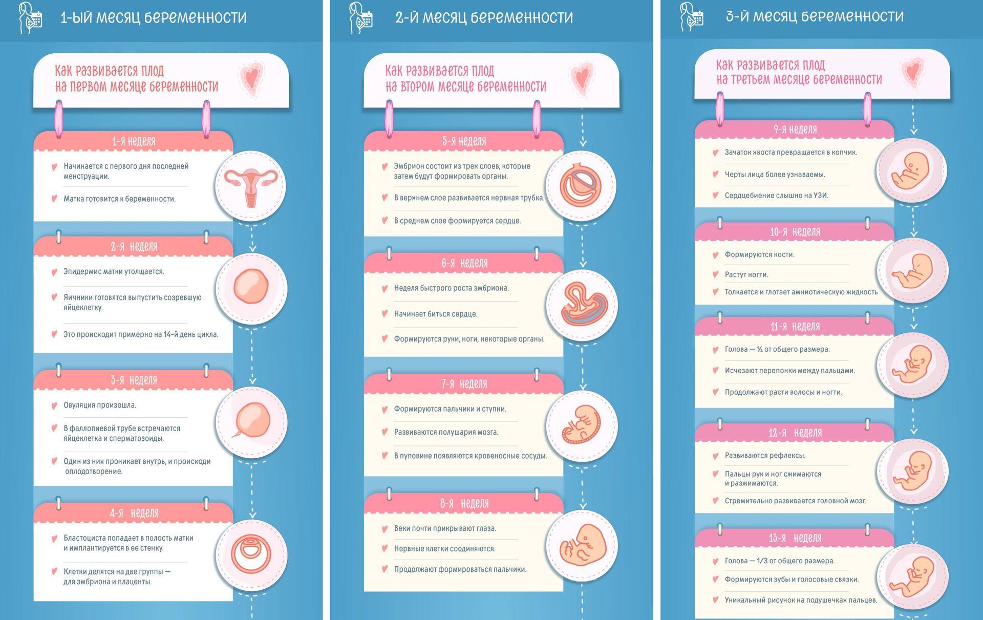 Беременность в картинках по неделям описание