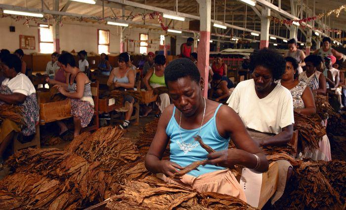 Кубинские женщины делают сигары