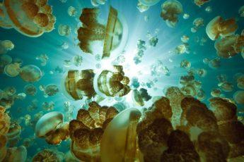 Миллионы медуз в воде озера на востоке острова Эйл-Малк