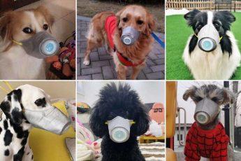 Можно ли заразиться коронавирусом от собаки, кошки и других домашних животных?