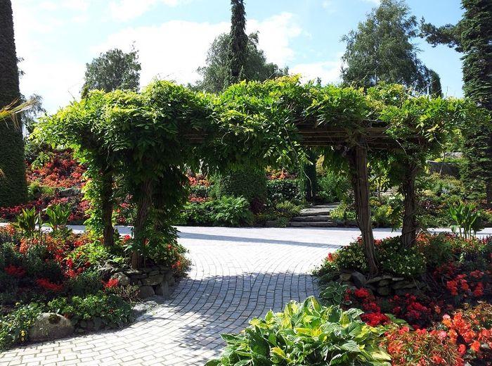 Лето в тропическом саду Flor og fjære