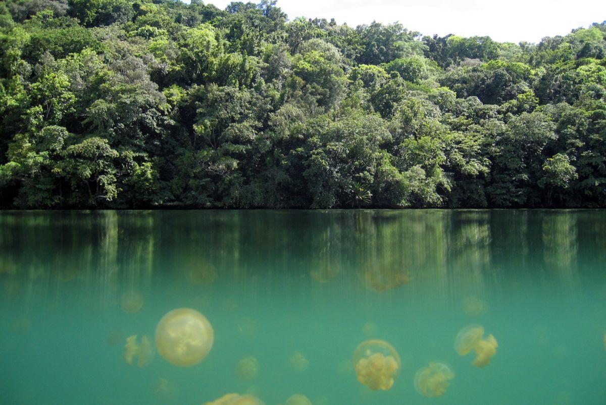 Озеро Медуз острова Эйл-Малк в архипелаге Палау