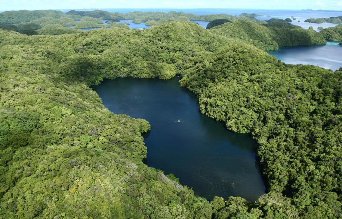 Озеро медуз в Тихом океане в архипелаге Палау