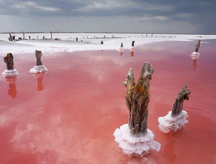 Сиваши с розовой водой