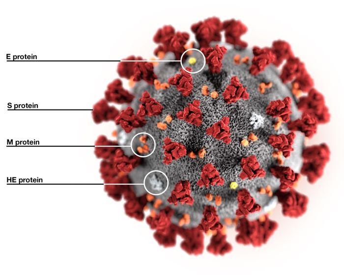 3D визуализация коронавируса SARS-CoV-2